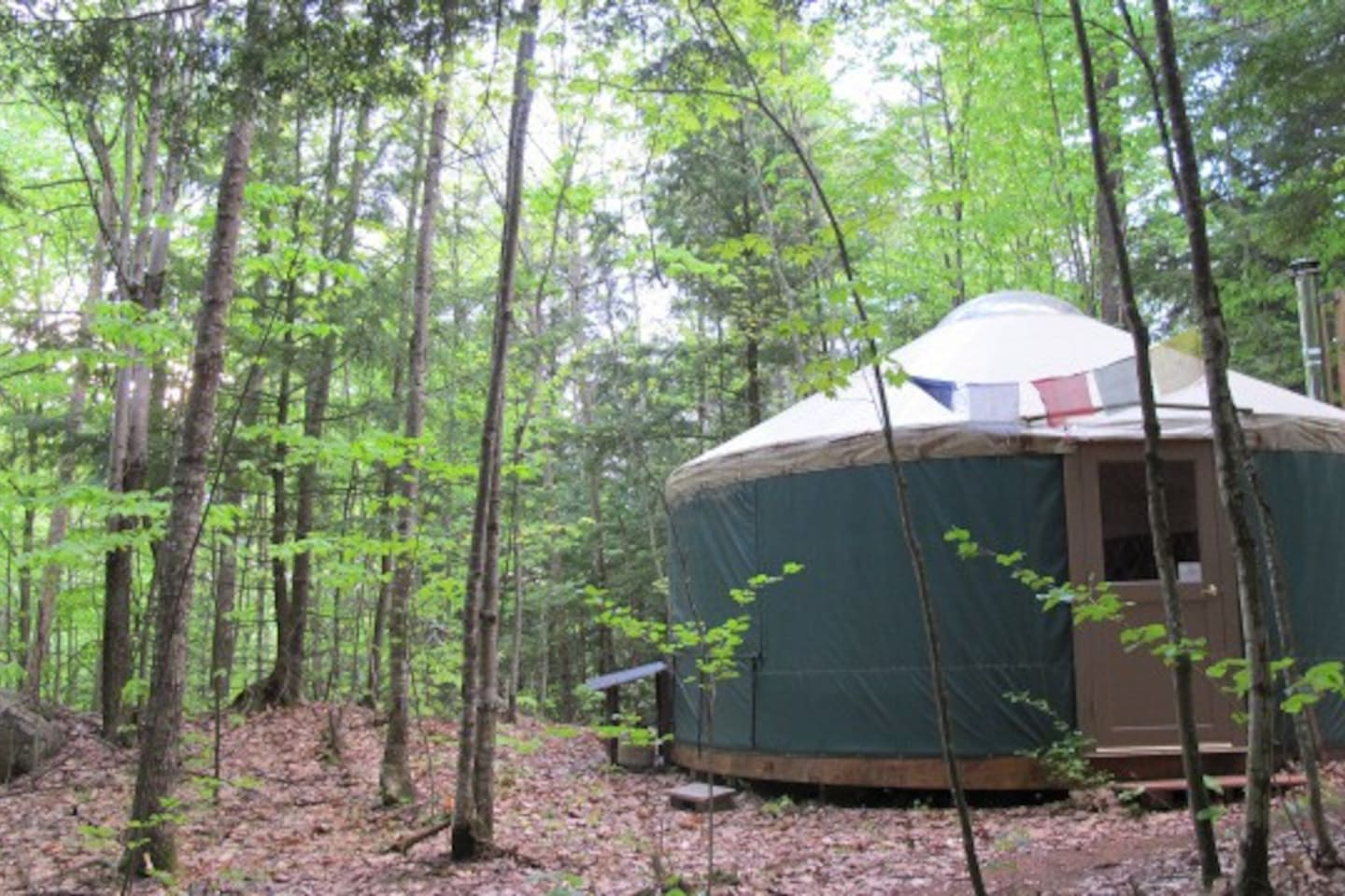 Let the forest and the  nearby spring fed mountain brook bring you peace during your  eco-holiday.