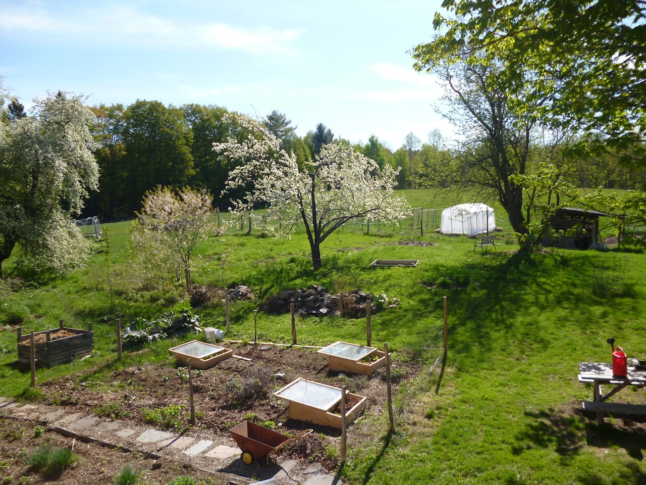 The springtime view from the upstairs-- apple blossoms and cold frames.