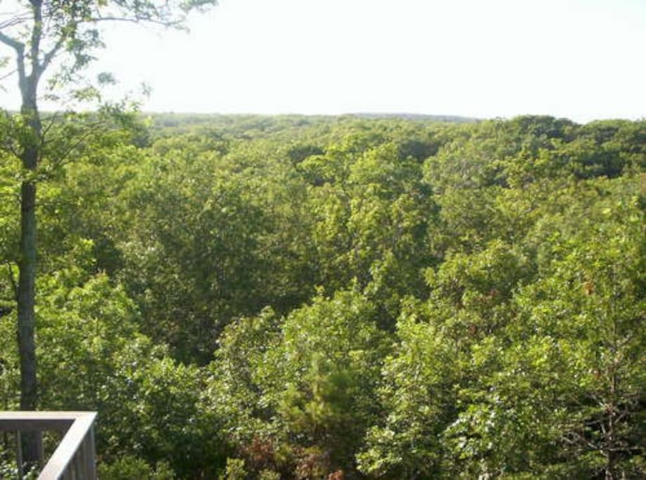 Treetops Distant Water Views Spa Houses For Rent In Tisbury