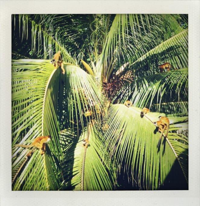 Jungle Cabin, Mira Olas Pavones