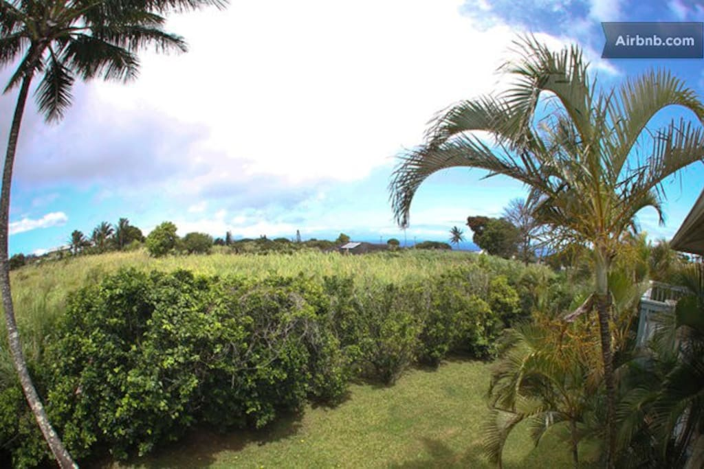 The beautiful tropical view