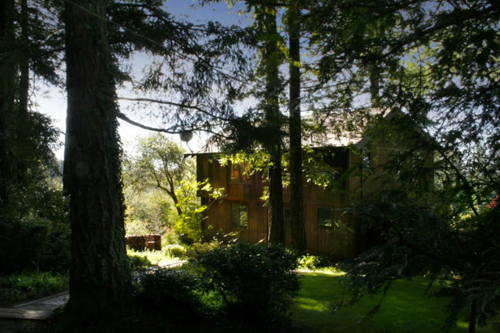 Arrive to your private retreat through the redwoods
