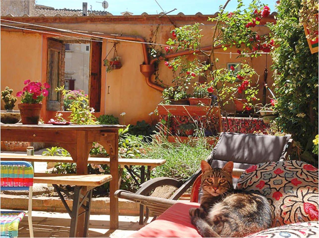 In terrazza con Rio, il nostro gatto