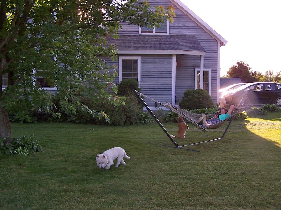 Guests are welcome to enjoy a cool beverage in the hammock.
