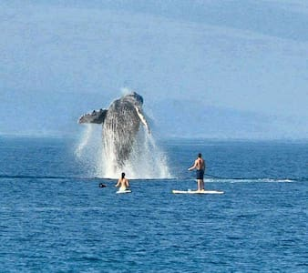 Watch surf&whales from deck children &pets welcome - Huoneisto