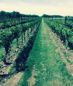 Villas in the vineyard. - ニューパルツ