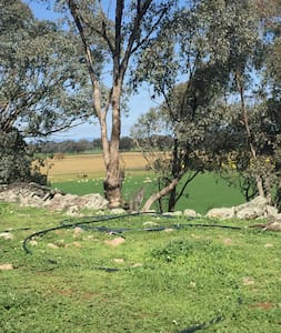 """Marlebed Pastoral Co """"The Shed"""" 15 mins from Cowra - Cabin"""