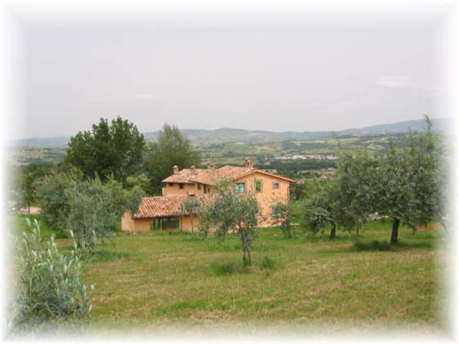 the villa and the olive grove
