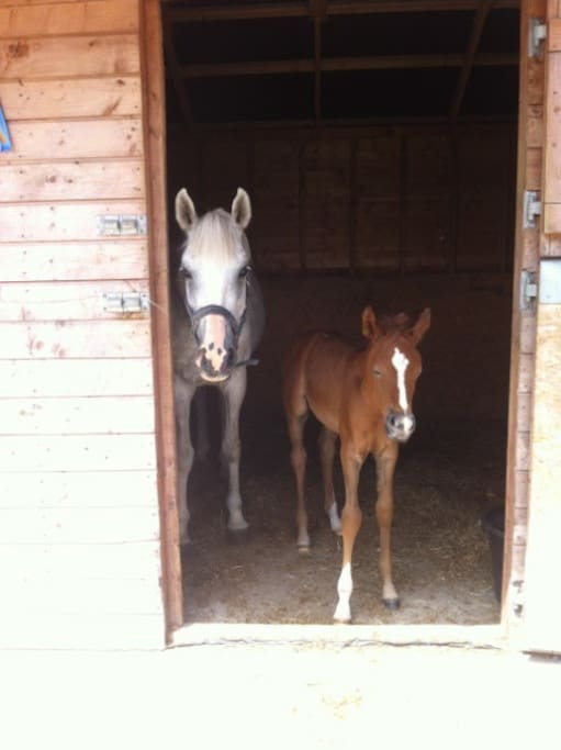 our latest foal Lulu
