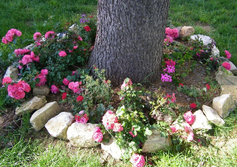 Aiola fiorita