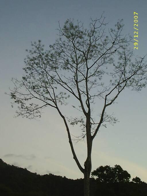 En la zona superior de la ruta a Bijagual se observan este tipo de árboles típicos de un bosque tropical seco.
