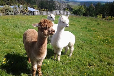 Grant and Sue's Alpacas - Bed & Breakfast
