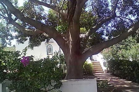 Vulcano FicusBenjamin Eolian Villa - Lipari - Villa