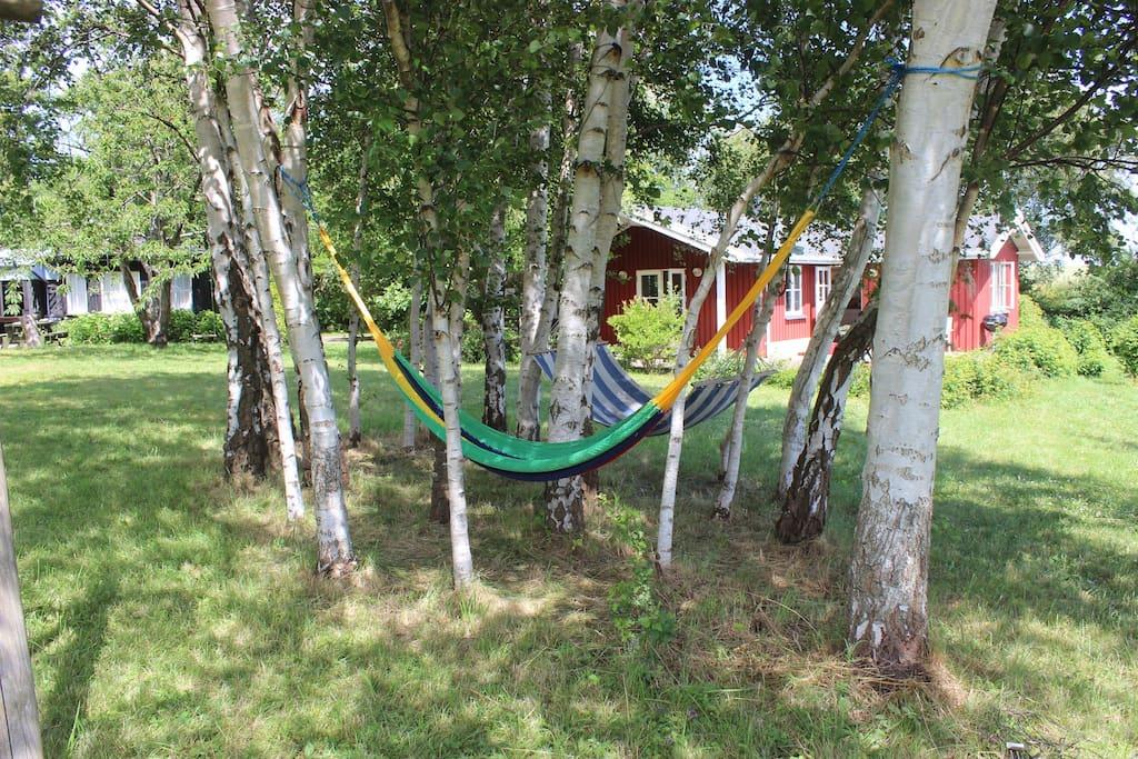 birch garden with hammocks - both houses in the background.