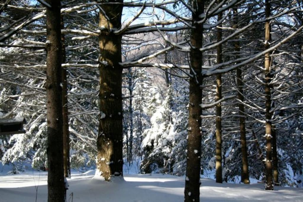 Surrounding woods in the winter wonderland phase.