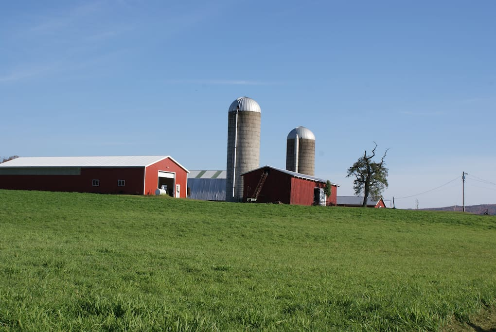 Former dairy farm on 125 glorious acres.