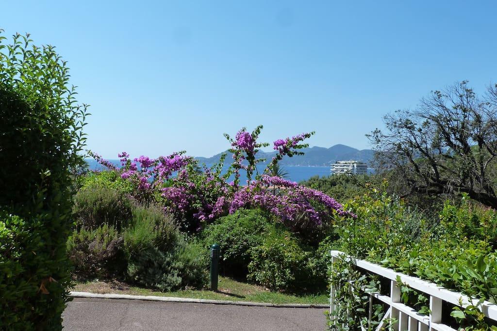 Une végétation luxuriante et un jardin magnifique