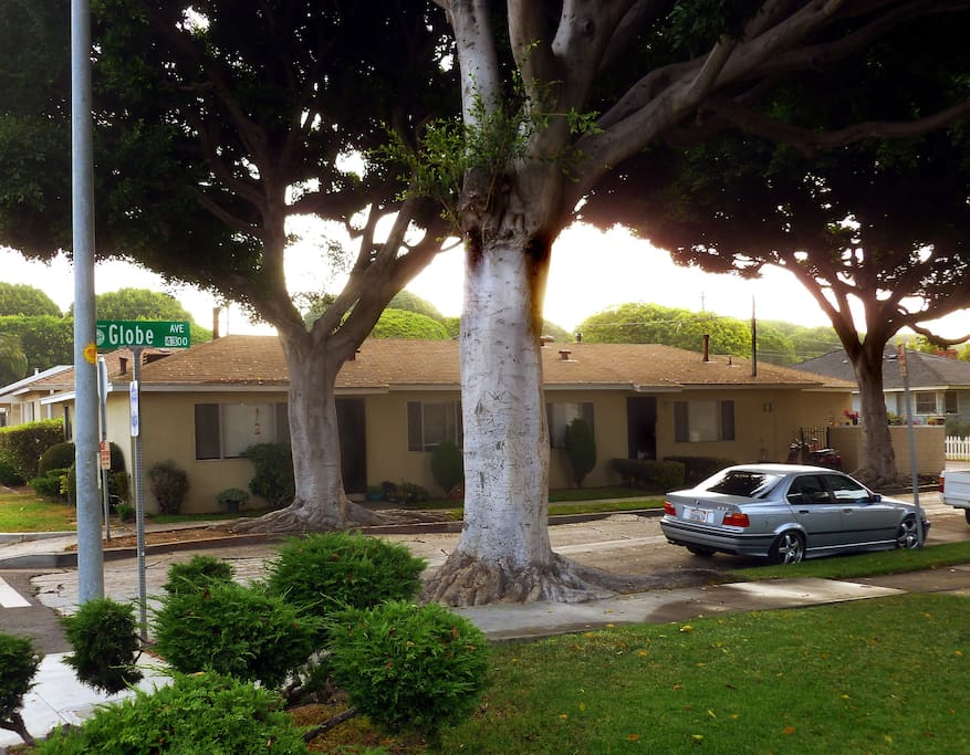 Duplex from across Glove Ave. My half is on the left. Ficus trees give cooling shade.