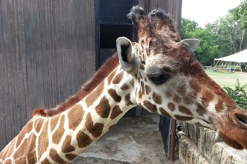 We are just a mile away from the world-class Sedgwick County Zoo. Pretty girl!