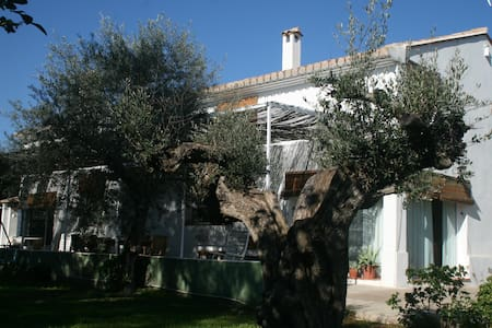 El Olivo, family country house near the beach - Navajas - Casa