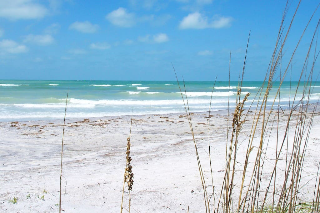 Caladesi Island State Park across from Honeymoon Island these are barrier islands **VOTED #1 BEACH IN US 2 TIMES**