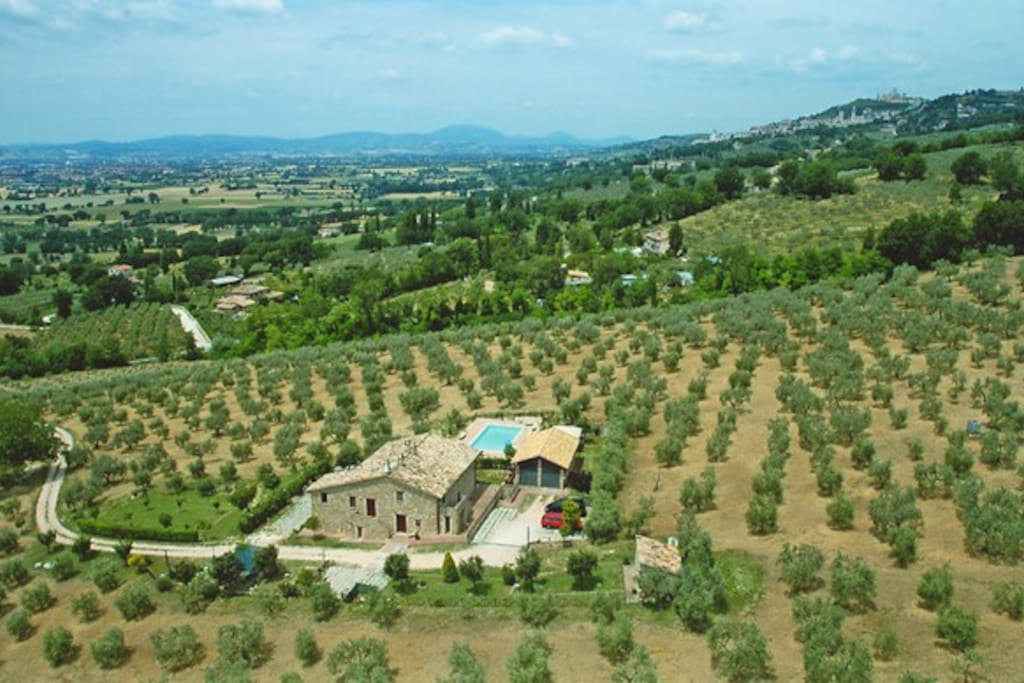 Aerial view of the Villa dn the olive grove with Assisi in the distance