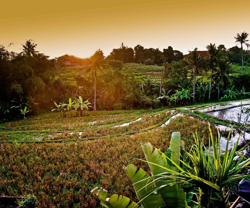 Exotic balinese room in ricefield..
