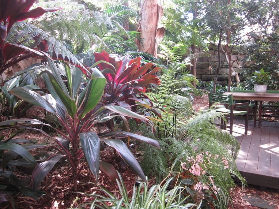 The rainforest 5 minutes walk from Sydney Harbour Bridge!