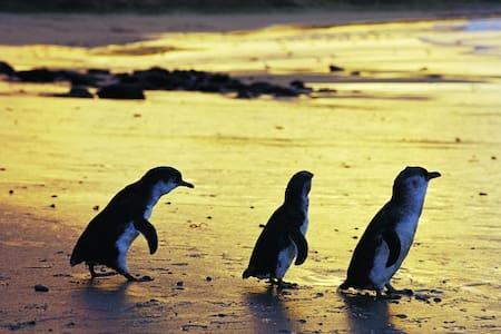 Phillip Island Bass Coast Victoria - Wikt i opierunek