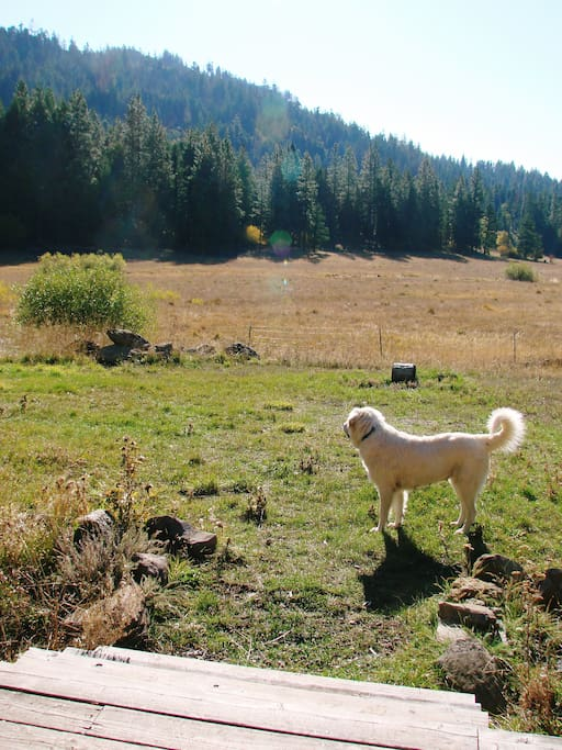 View from the porch with a livestock guardian pooch