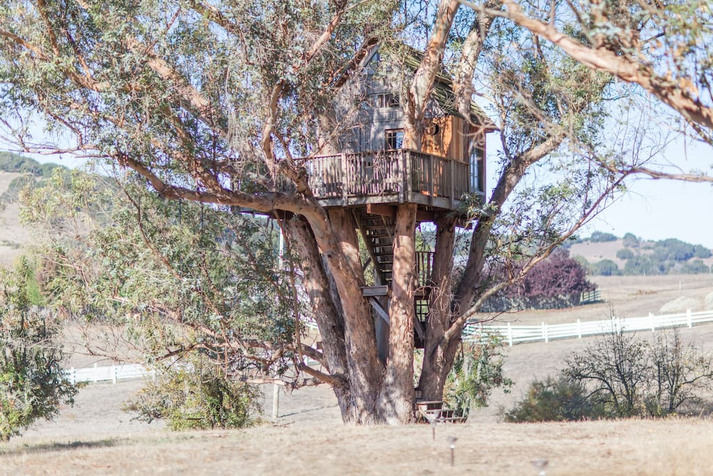 Tree House at Swallowtail Studios