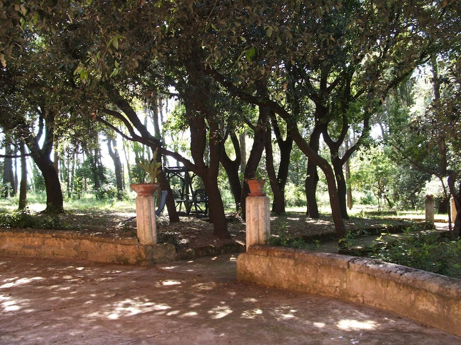 Vista del giardino dal piazzale