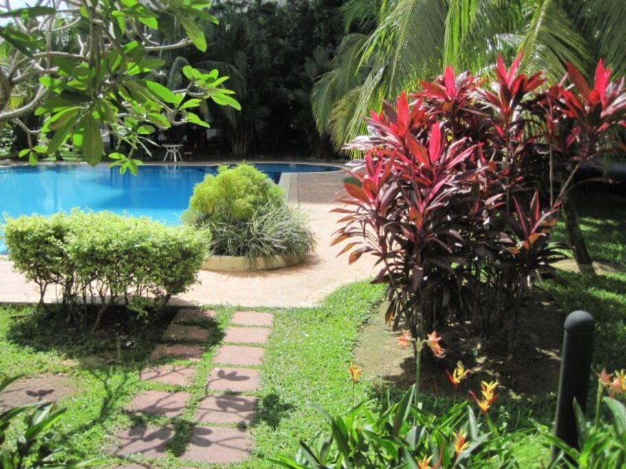 Swimming-pool, green view.