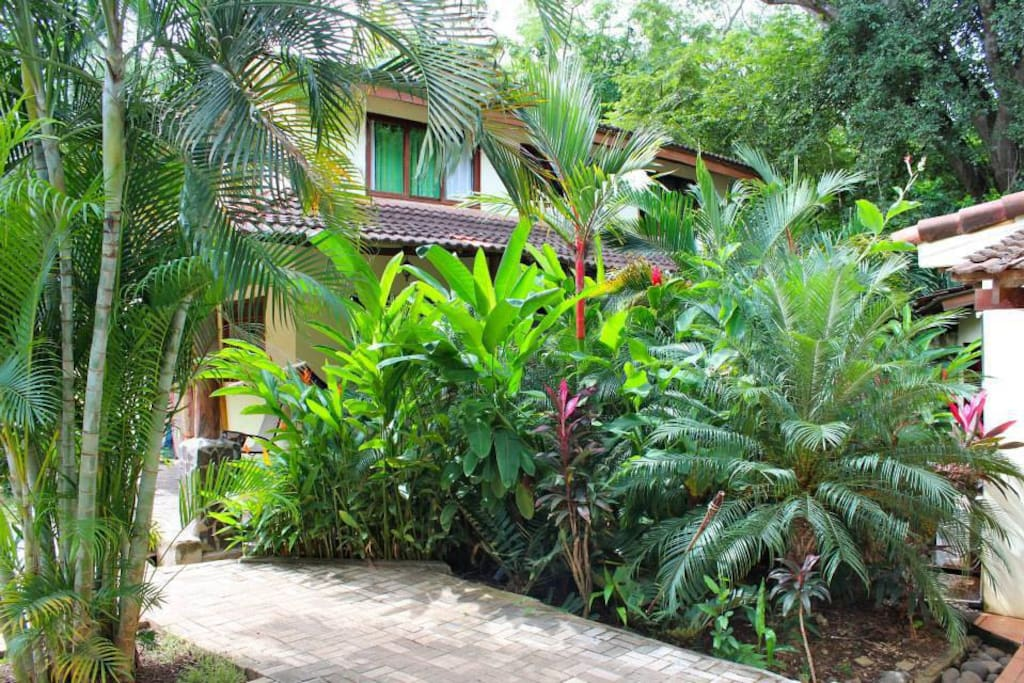 Our lush tropical gardens