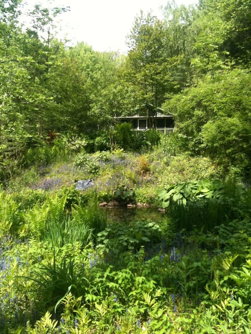 Deeper into the forest garden there is a lovely frog pond surrounded by lush plants almost like a jungle.