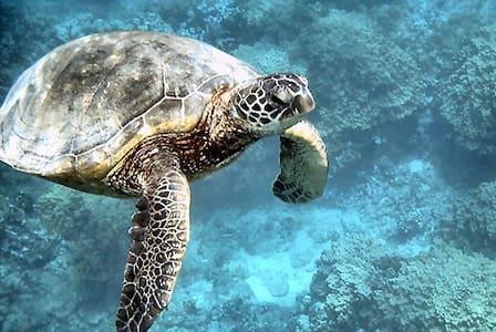 Absolute Beachfront-Turtle Cove