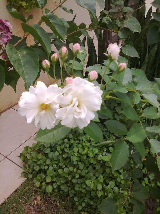 Flores do jardim.