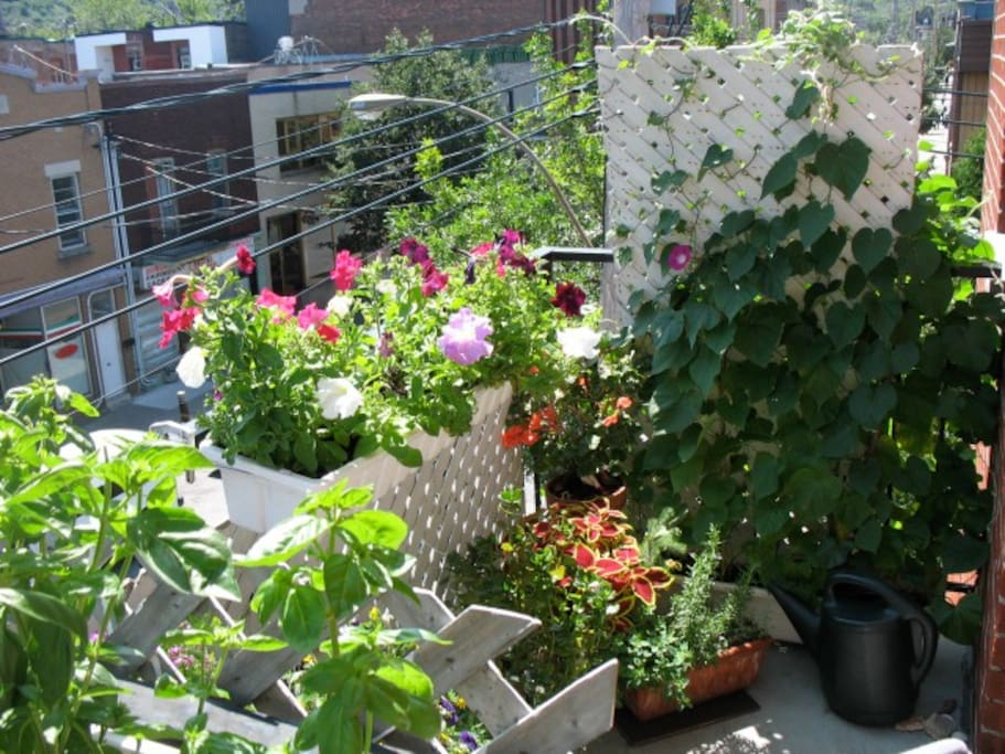 My front balcony in the summer.... I love gardening. I grow herbs that I use with joy on all my recipes.... :)