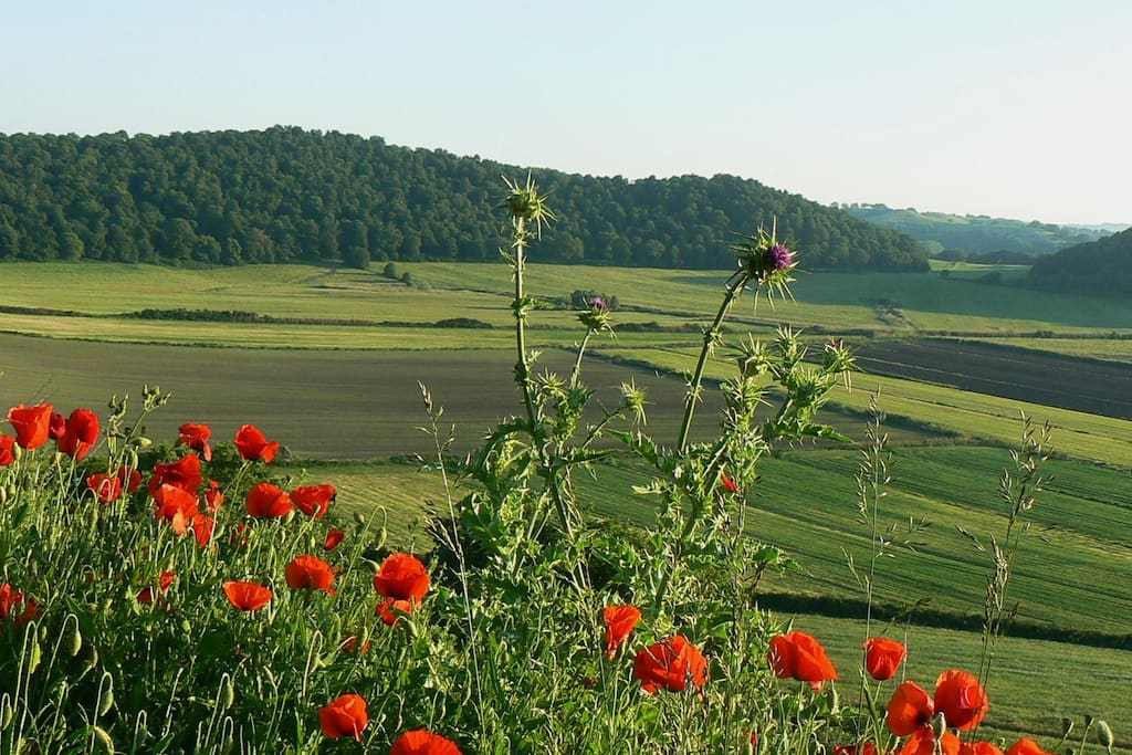 Enjoy the peace and beauty of the Italian landscape!