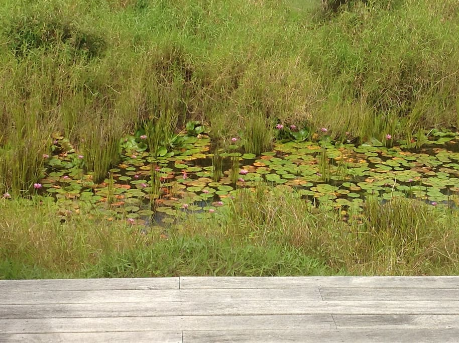 Lily Pond in front of the cottage.