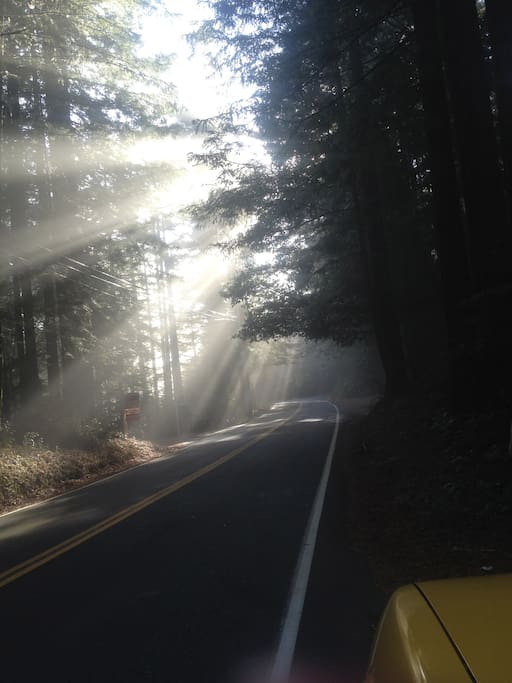 Another pretty road around here. The redwoods are stunning