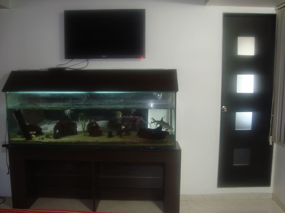 A rel2kOaxing, de-stressing view of a six foot aquarium from the comfort of your bed.x