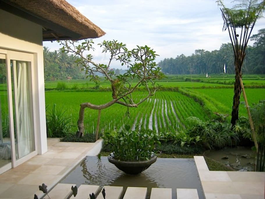 Newly planted rice field views from the terrace of River Moon