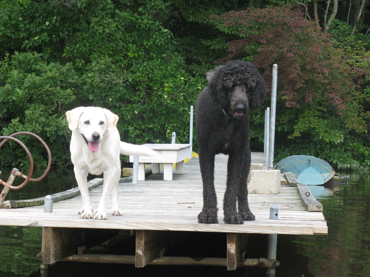 Our dogs on the dock at Moot Point Farm - rowing scull in background.