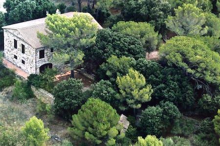 Maison cévenole sur terrain boisé - Rumah