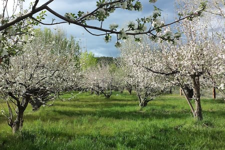 Amelia's Orchard - Rumah