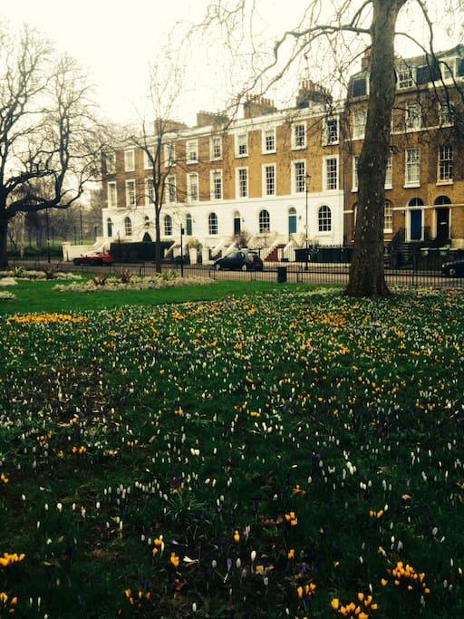 Addington Square in early spring