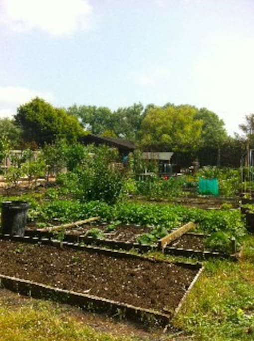 Organic Allotment