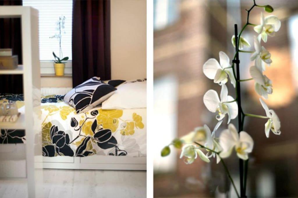 The guestroom: Welcome! Herzlich willkommen! Bienvenue! Bienvenido! :))