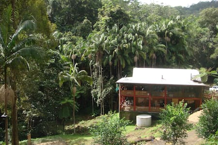 Eco Rainforest Permaculture Offgrid - Other